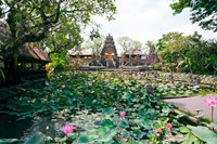 Water lilies in a pond at the Pura Taman Saraswati Temple, Ubud, Bali, Indonesia Fine-Art Print