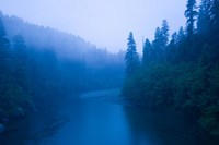 River passing through a forest in the rainy morning, Jedediah Smith Redwoods State Park, Crescent City, California, USA Fine-Art Print