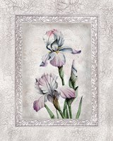 Floral IV Fine-Art Print