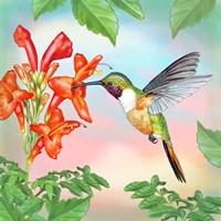 Bahama Woodstar In Honeysuckle Fine-Art Print