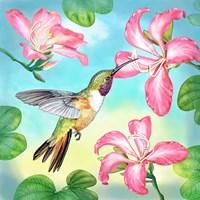 Bahama Woodstar In Orchid Tree Fine-Art Print