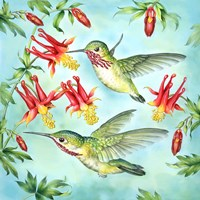 Calliopes Hummingbirds Fine-Art Print