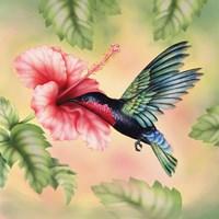 Purple-Throated Carib Fine-Art Print