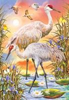 Sandhill Cranes Fine-Art Print