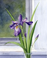 Blue Flag-Wild Iris Fine-Art Print