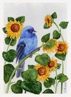 Indigo Bunting And Sunflower Fine-Art Print