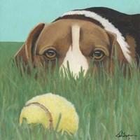Dlynn's Dogs - Sunny Fine-Art Print