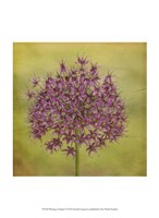 Waiting on Purple V Fine-Art Print