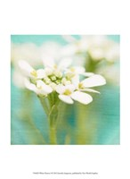 White Flowers I Fine-Art Print