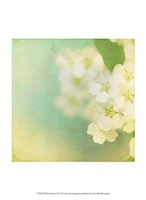 White Flowers II Fine-Art Print