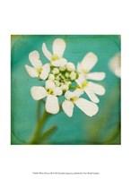 White Flowers III Fine-Art Print