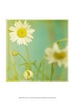 White Flowers IV Fine-Art Print