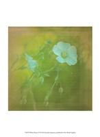 White Flowers VI Fine-Art Print