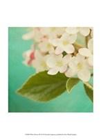 White Flowers IX Fine-Art Print