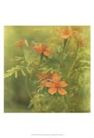 Filtered Dreams I Fine-Art Print