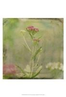 Filtered Dreams VI Fine-Art Print