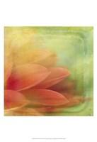 Filtered Dreams VII Fine-Art Print