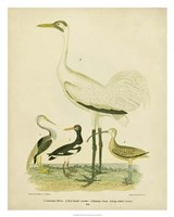 Antique Crane & Heron Fine-Art Print