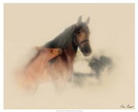 Horse Portrait X Fine-Art Print