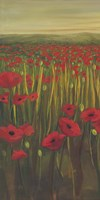 Red Poppies in Field I Fine-Art Print