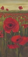 Red Poppies in Field II Fine-Art Print