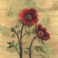 Anemone on Wood Fine-Art Print