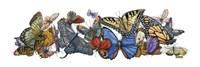 Wings of Splendor I Fine-Art Print