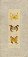 Butterfly Trio I Fine-Art Print