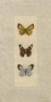 Butterfly Trio II Fine-Art Print