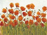 Rows of Poppies I Fine-Art Print