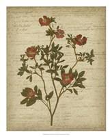 Romantic Pressed Flowers I Fine-Art Print
