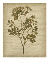 Romantic Pressed Flowers IV Fine-Art Print
