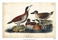 Audubon Ducks II Fine-Art Print