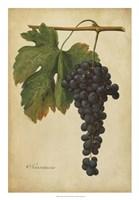 Vintage Vines I Fine-Art Print