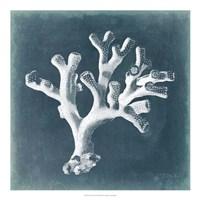 Azure Coral II Fine-Art Print