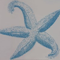 Sea Stars I Fine-Art Print