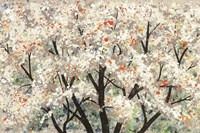 Pear Blossoms in Spring Fine-Art Print