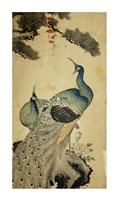 Korean Peacocks Fine-Art Print