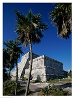 Palm trees near El Castillo Fine-Art Print