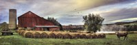Hay Harvest Fine-Art Print
