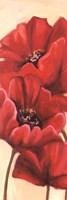 Red Poppy III Fine-Art Print