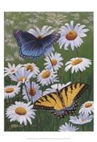 Butterflies & Daisies Fine-Art Print