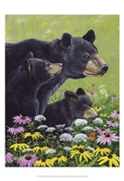 Black Bears Fine-Art Print