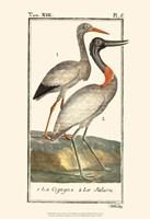 Buffon Cranes & Herons I Fine-Art Print