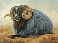 Baa Baa Black Sheep Fine-Art Print