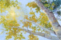 Aspen Canopy Fine-Art Print