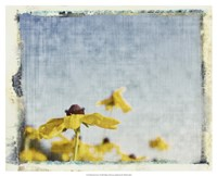 Blackeyed Susans I Fine-Art Print