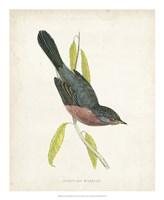 Dartford Warbler Fine-Art Print