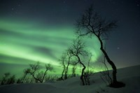 Northern Lights in the arctic wilderness, Nordland, Norway Fine-Art Print