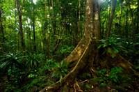 Forest scene in Masoala National Park Fine-Art Print